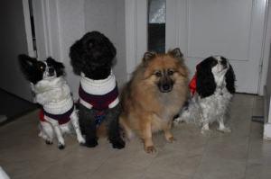 julpyntade hundar på rad