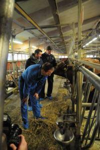 stefan hälsar på en ko